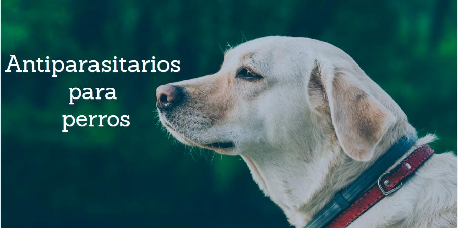 antiparasitarios-para-perros.