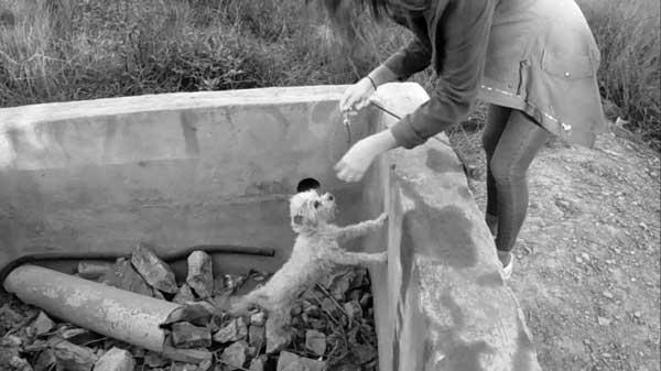 perro-gato-abandonado-que-hacer