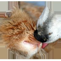 Mascotas en PetSOS