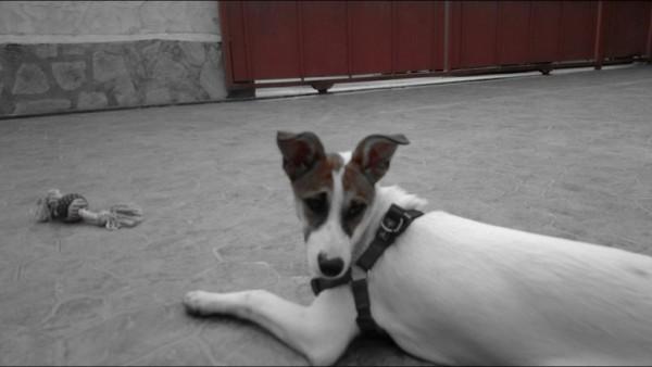Imagen 3 de la mascota