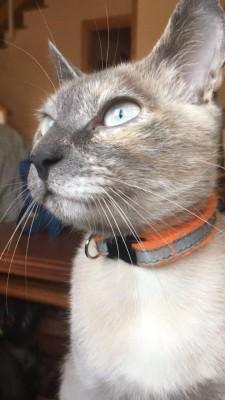 Imagen 2 de la mascota