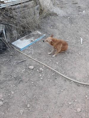 Imagen 1 de la mascota