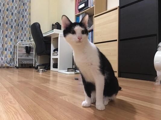 Imagen 5 de la mascota