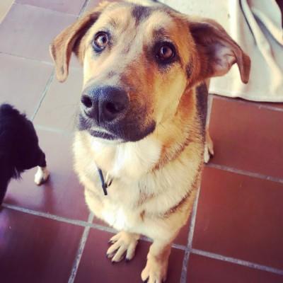 Imagen 4 de la mascota
