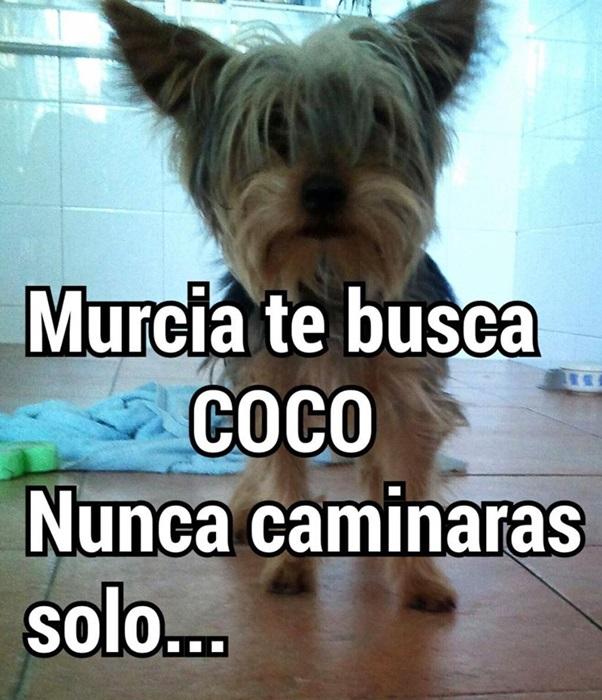 Imagen Coco